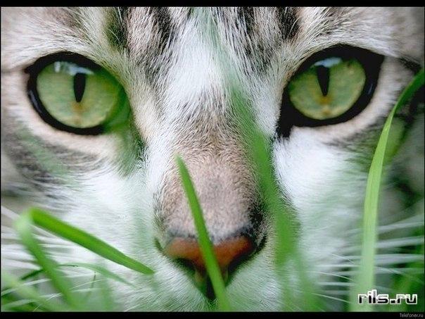 Кошки VS Собаки - Страница 3 GGLpb_r22I8