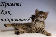 Привет.Как дела?