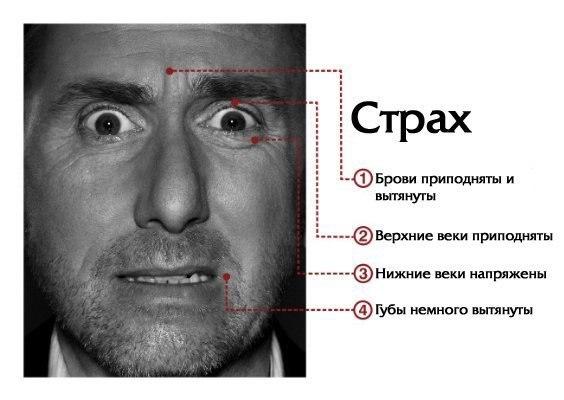 мимика лица - страх