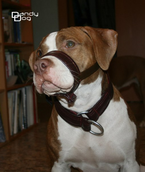 Намордник для собак своими руками