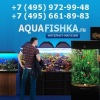 Аквариумы - Аквафишка Интернет-Магазин. Продажа аквариумов и оборудования.