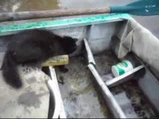 Кошка ловит рыбу и кормит котят