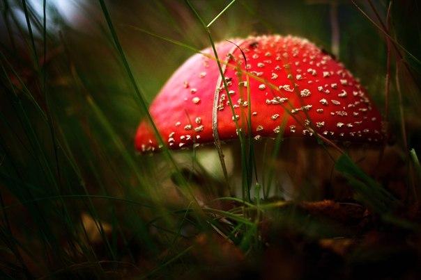 «Царство грибов». Подборка фотографий, сделанных нашими читателями.