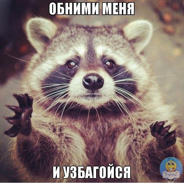 http://cs301706.vk.me/v301706955/5987/PmJ0bwum-Dc.jpg