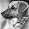 Дозор 63, помощь бездомным животным в Самаре!