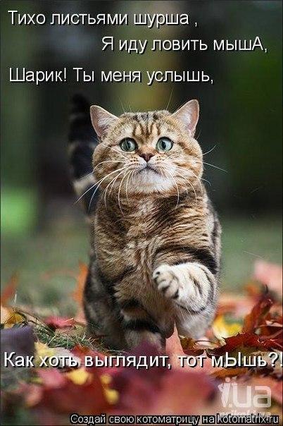 http://cs301713.userapi.com/v301713029/b41a/psqO97lsmr0.jpg
