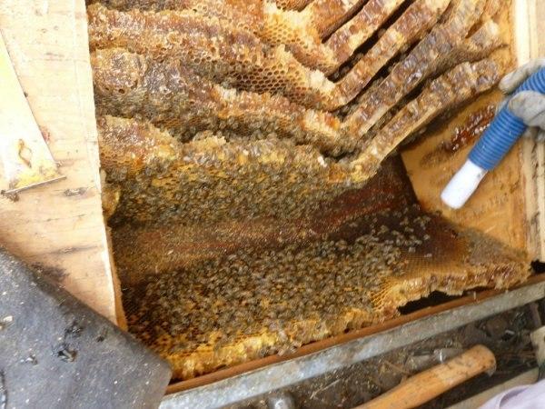 Бесплатный мед