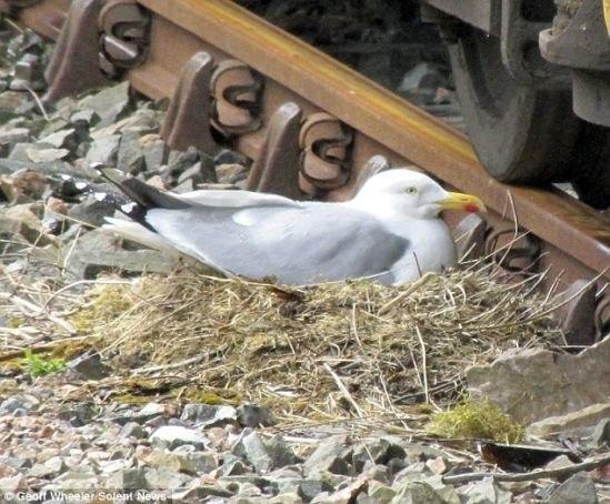 сойка птах фото