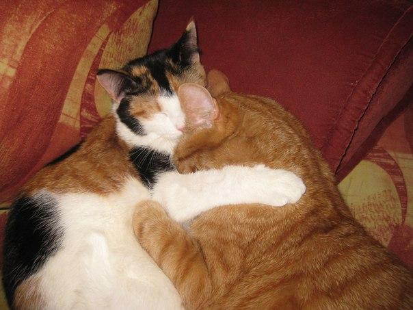 Смешные кошки vk