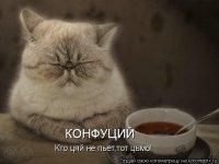 Миха Голебев, 4 февраля 1990, Почеп, id89601844