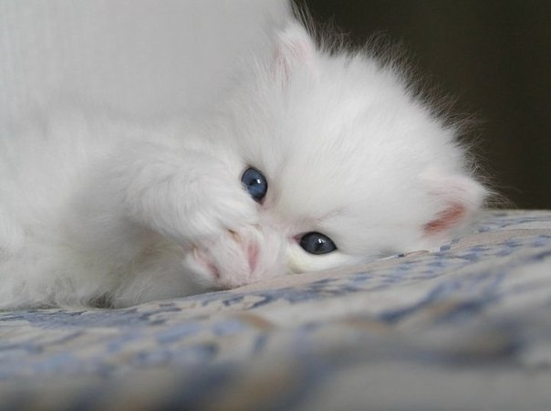 Картинки, спокойной ночи картинки с котятами зеленые глаза