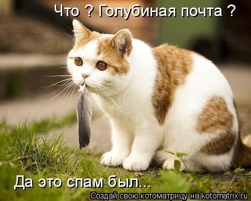 аватарки приколы: