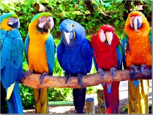 Новая загадка эта редкая птица