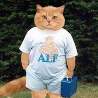 Фото на аву котов смешных