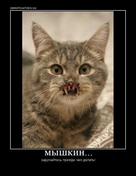 фото котёнка мышкина