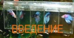 Петушки и другие аквариумные рыбки.
