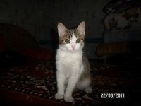 Таня Колесник, 6 декабря , Новосибирск, id165428745