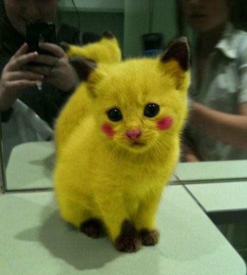 mega blaziken pokemon of the week