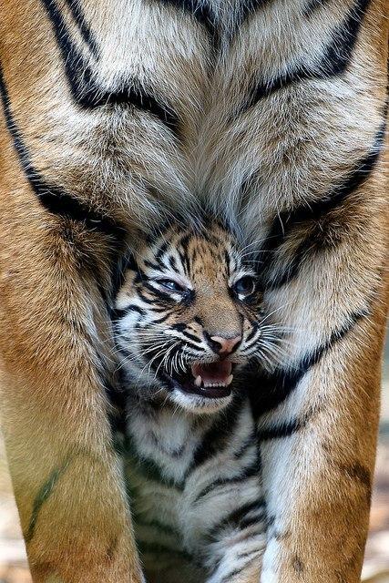 Занимательные истории о животных ,фото... - Страница 6 UdFssmfEhw8