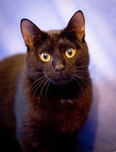 Картинки и видео с котятами +арты винкс арты