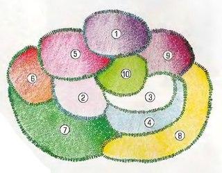 Цветник, требующий минимального ухода.  1. Клематис 'Gipsy Queen' 2. Пион белый, махровый (h=95-100 см) 3...