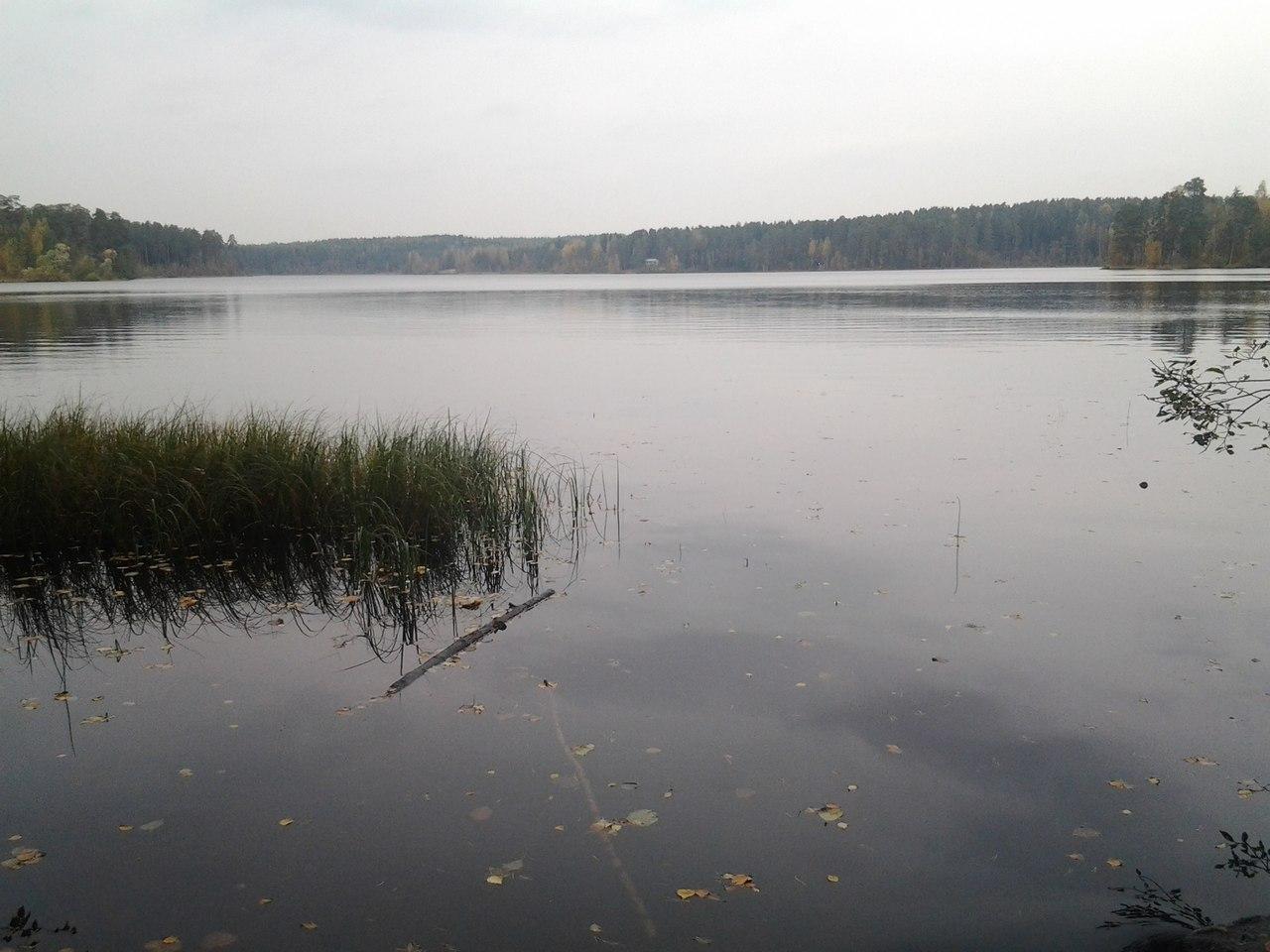 Клуб рыболовов Ярославля и Ярославской области  Лесохот