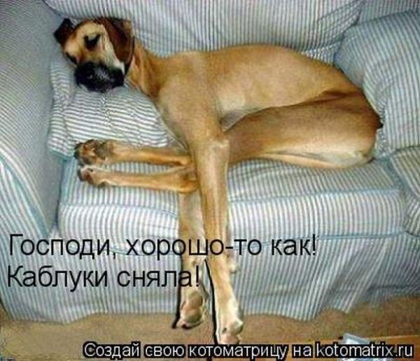 смешные картинки приколы про животных: