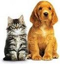 4. 3. 2. Коллекция фотографий котят с щенятами, утятами, кроликами и другими животными.  Котята и. Показать все...