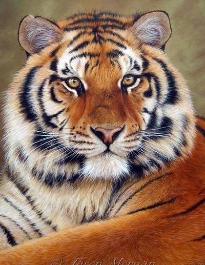 Шурка Tiger, 6 ноября 1999, Москва, id144188265
