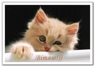 кот,котенок,смешно.прикольно,красиво,весело,животные,настроение,привет,приветик,лето,поздравляю,подруге,другу,позитив,мило,тебе,для тебя