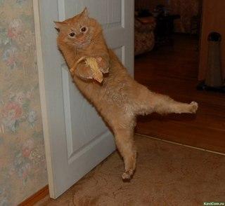 Какой ты кот вк