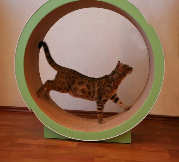 Форум родителей - МАЛЫШОК Дом для кошек