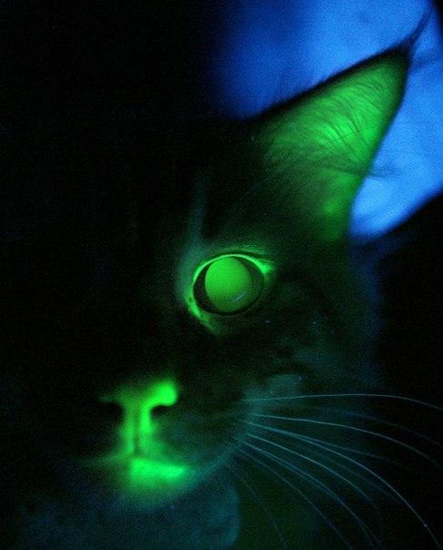 Ярко зеленые глаза у мужчин - 8
