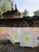 Wat Phra Phai Luang, Сукотаи 5