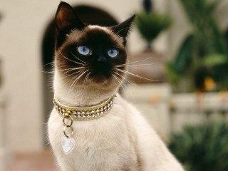 Самые милые котята в мире фото скачать бесплатно - 5b