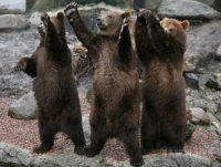 Просто Медвед