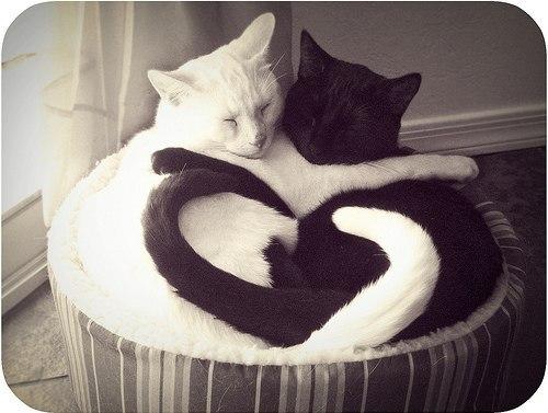 Даже жывотные знают што такое любовь
