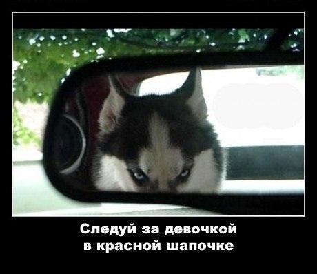http://cs303110.userapi.com/u164959332/-14/x_e58d82d0.jpg