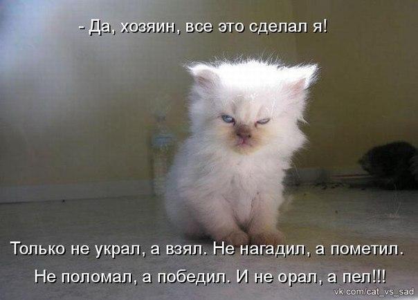 negri-s-ogromnimi-fallosami-ebut-telok-gruppovuha-slizal-spermu-svoyu-video