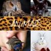 Аренда животных, птиц, рептилий для съемок