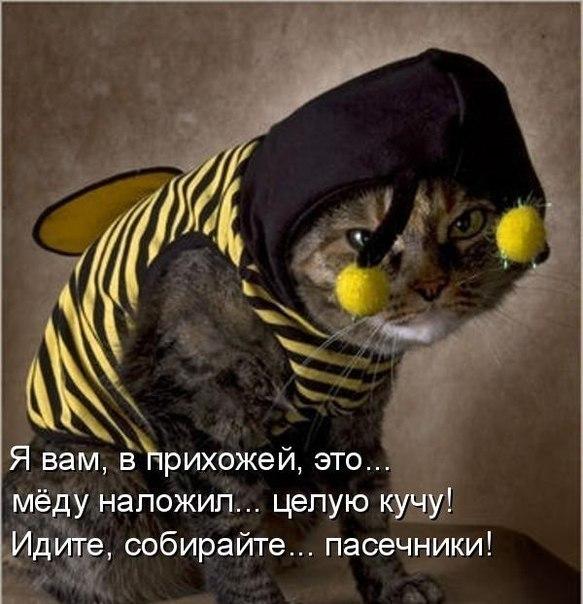 Кошачий юмор - Страница 3 L44Mj7ryHJ8
