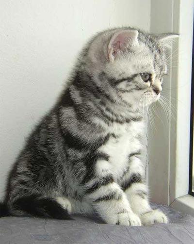 Картинку на аватар. котик.