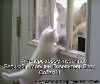 Галя Симкович, 11 ноября 1998, Старый Оскол, id170078595