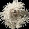 Dogs Elysium - одежда и аксессуары для собак