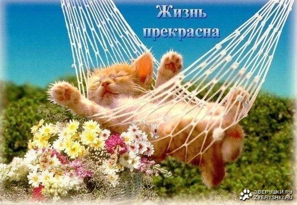 http://cs303211.vkontakte.ru/u63506942/145173417/x_5d8174c9.jpg