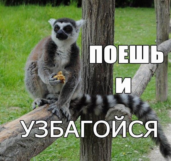 Узбагойся Мем Картинку