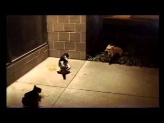 cat vs bear, alligator, fox, dog / кошка против медведя, лисы, собаки /  猫対クマ、キツネ、犬 / 貓與熊,狐狸,狗