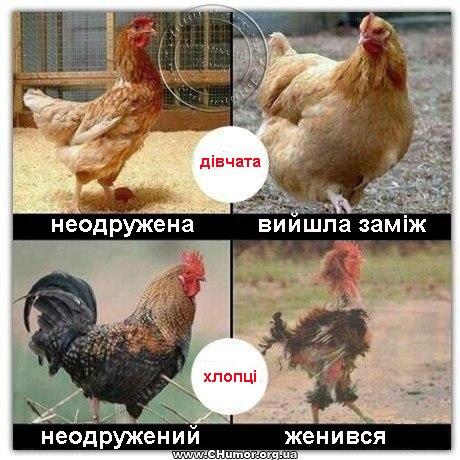 Автор адміністратор у фото приколи