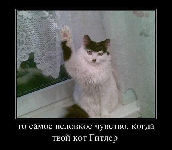 Кошечки..Кошарики)) - Страница 3 U6gcxWQLYEc