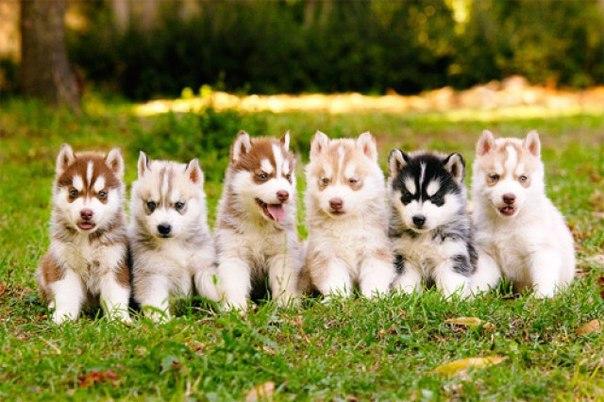 Милые собачки